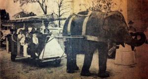 Elephant on Main