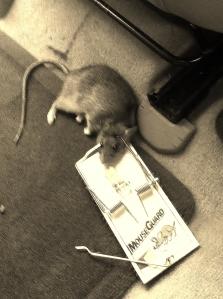 Dead Rat 016 - Copy